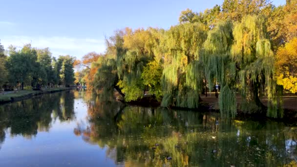 Kilátás a tóra kacsákkal és fákkal. A nap sugarai a fák koronáira hullanak, varázslatos érzést keltenek. A természet szépségének fogalma.