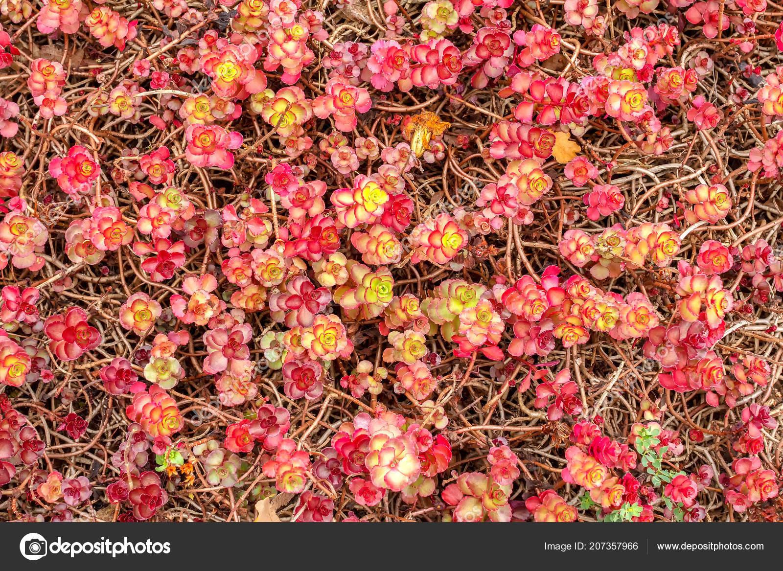 Жирные с цветами