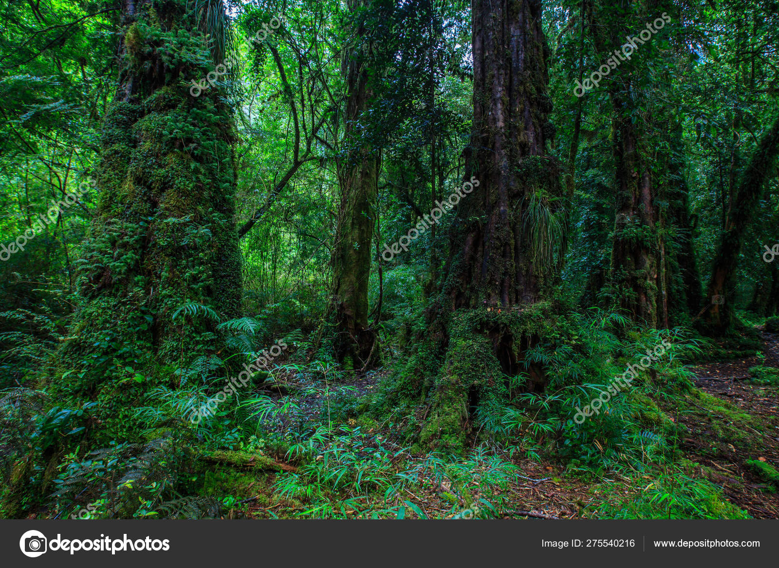 Detail Enchanted Forest Carretera Austral Bosque Encantado Chile Patagonia Stock Photo Image By C Riverriver 275540216