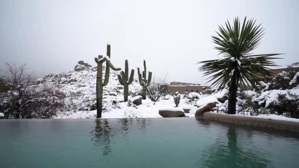 High Definition B-Roll felvételeit Saguaro Cactuses szereplő Snow után rekordot döntő téli snowfall Scottsdale, Arizona USA