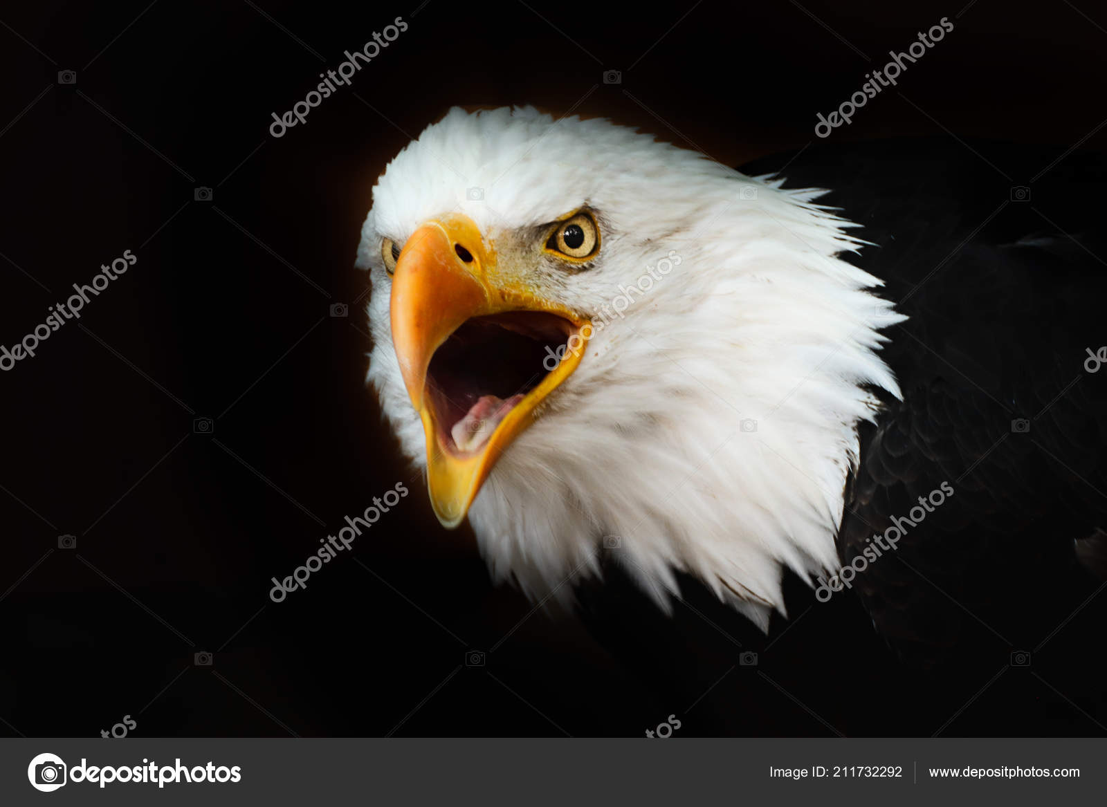 Wallpapers Wallpaper Of Eagle Bald Eagle Black Wallpaper