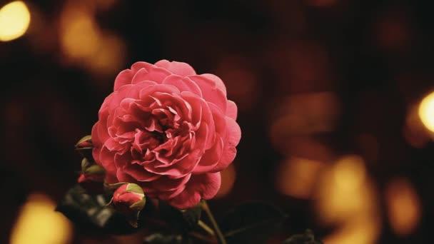 Pink rose gold bokeh