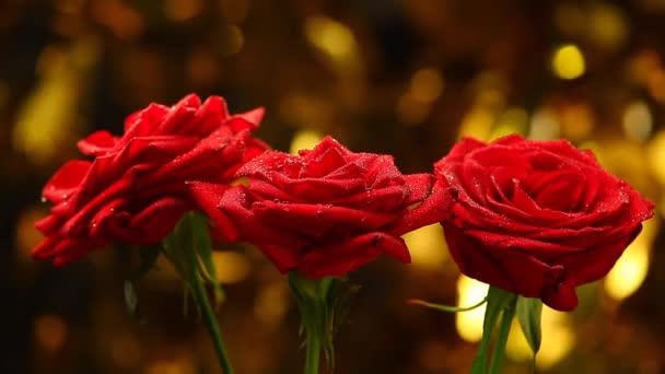 Rózsa virág edzőtermi minőségben