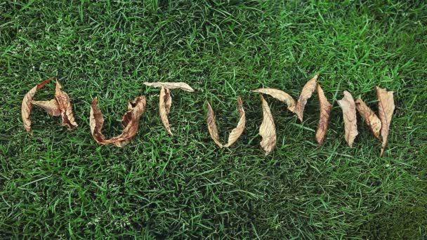 podzimní strom listy text