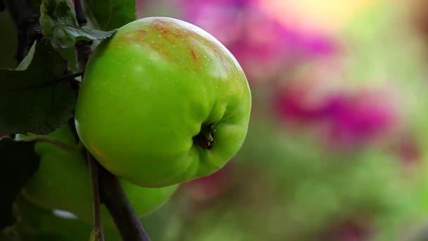 Green Apple tree zahradní hd