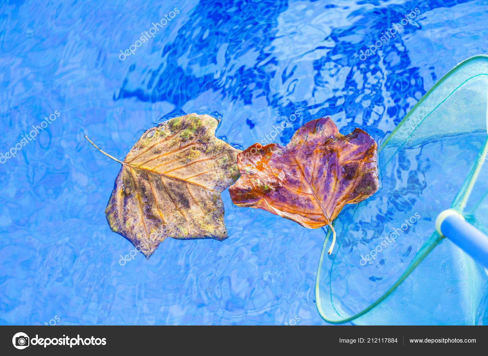 Autumn Leafs Clean Swimming Pool — Stock Photo © GORLOV ...