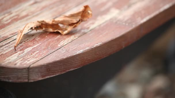 Autumn leaf wooden table footage hd