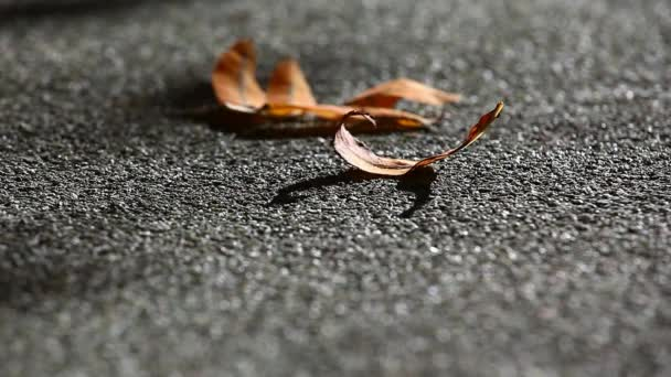 Autumn Leafs asphalt background hd footage