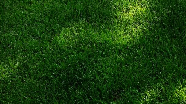Zelená tráva strom stínu hd záběry