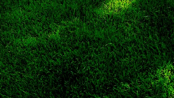 Green Grass Tree shadow hd footage