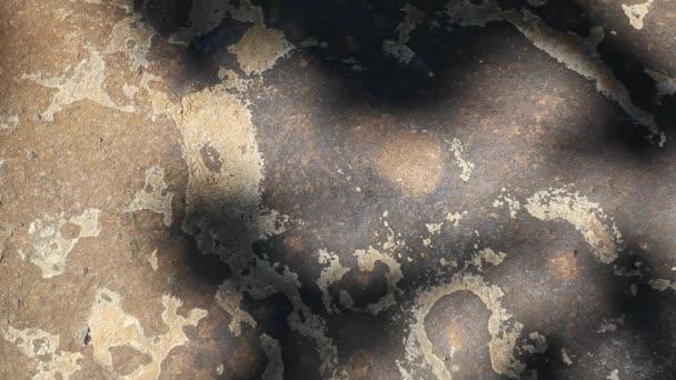 Kamenná zeď strom stínu hd záběry