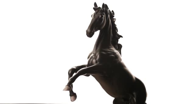 Black Horse bílé pozadí hd záběry