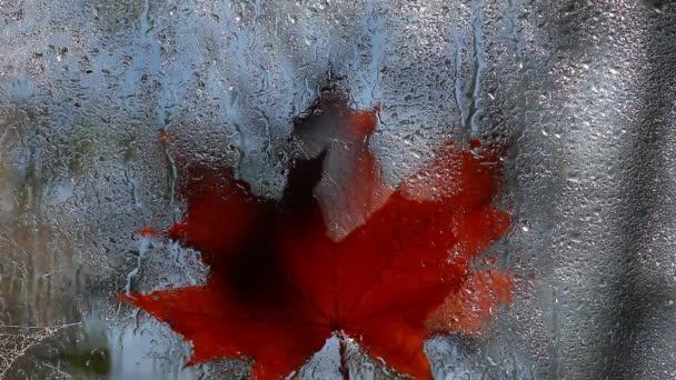 Okno na podzim listí déšť klesne hd záběry