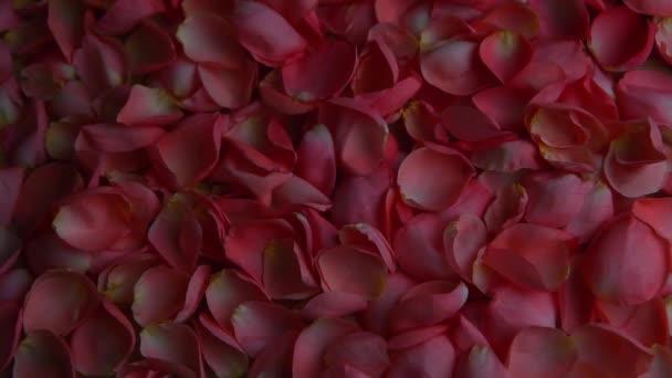 růžové okvětní hd záběry