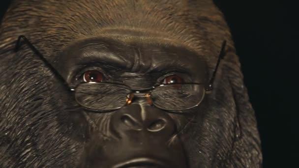 Gorilla fejét szemüveg sötét háttér HD hosszúság