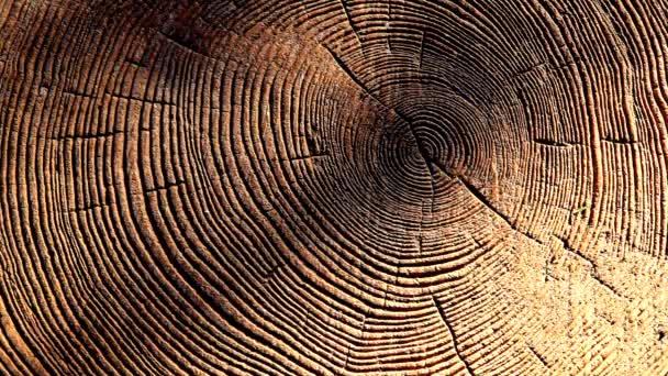 lesní strom stub sluneční stín nikdo HD záběr