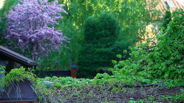 Garten Veilchen Mandeln Baum Hintergrund niemand hd Filmmaterial