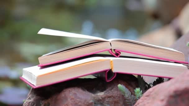 Buch Stein Fluss Sukkulente Pflanze Hintergrund niemand hd Footage