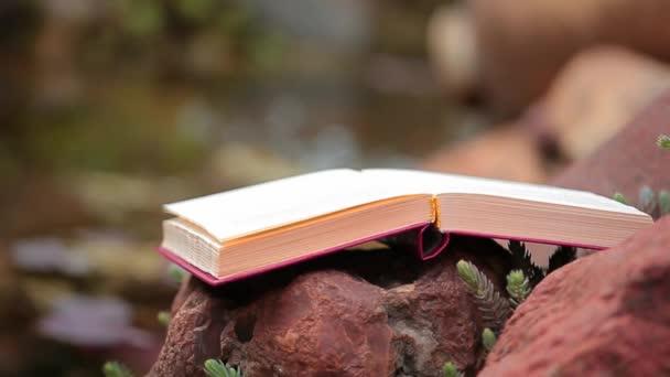könyv kő folyó zamatos növényi háttér senki HD felvételeket