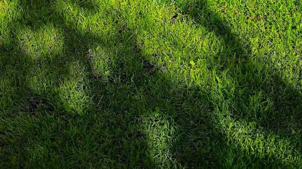zelená tráva strom stín HD záběry nikdo