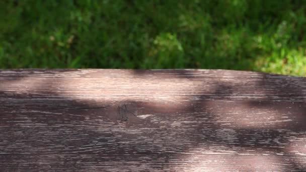 Filmmaterial des hölzernen Schreibtischbaums Schatten