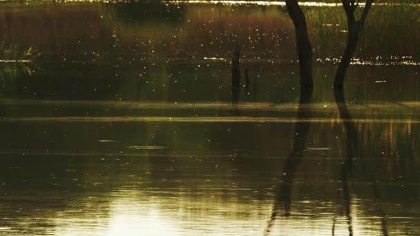 Több száz rovarok nyüzsgő felett a folyóba, miközben a nap beállítása