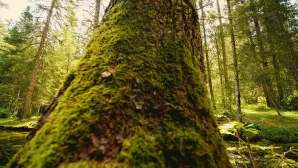 Venkovní snímek lesní krajiny s jasnou proud na jasné slunečné oblohy.