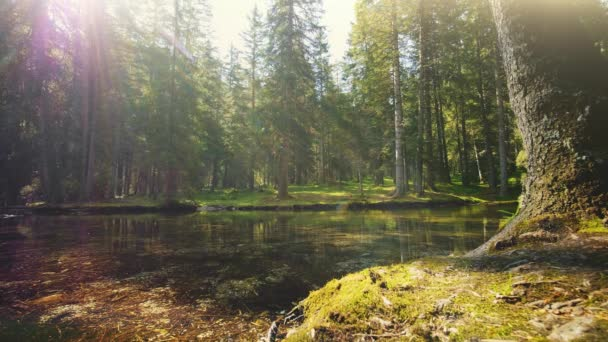 A clear view of the forest pond in Austria in the morning, timelapse.