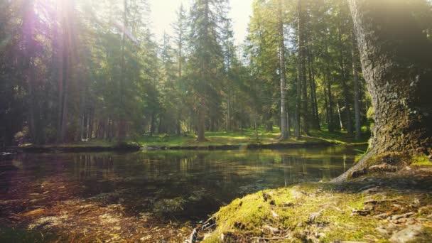 Jasný pohled lesní rybník v Rakousku ráno, timelapse.