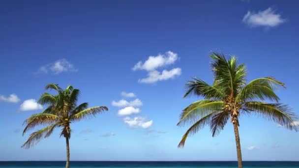 Picturesque view of two coconut trees swaying together with an amazing background of the beachfront.