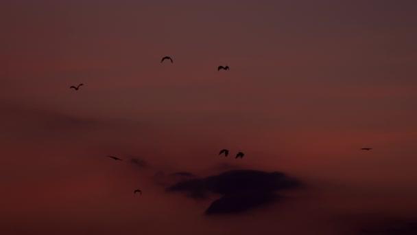 Fledermauskolonie fliegt mit rotem Himmel im Hintergrund