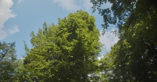 Tyčící se lesní stromy stojící Vysoký proti modré oblačné obloze na pozadí