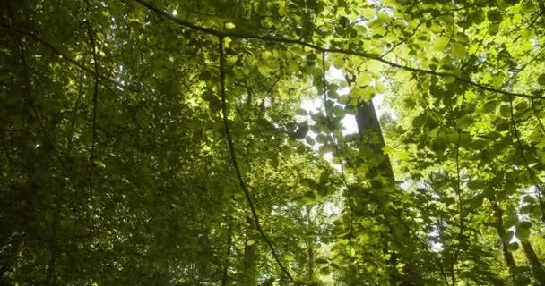 Detailní záběr jasně zelených listů stromů a slunečního svitu za stromy