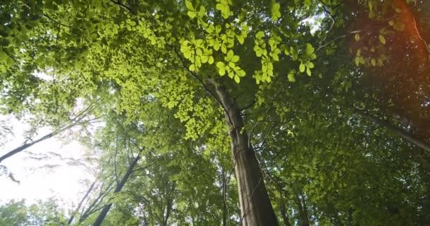 Nakloněný směrem nahoru záběr svěží zelené větve stromů a listy z bukového lesa