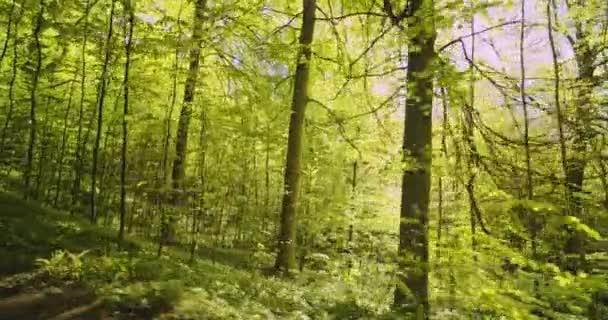 Relaxační pohled na lesní porosty a jasné slunce zářící mezi stromy