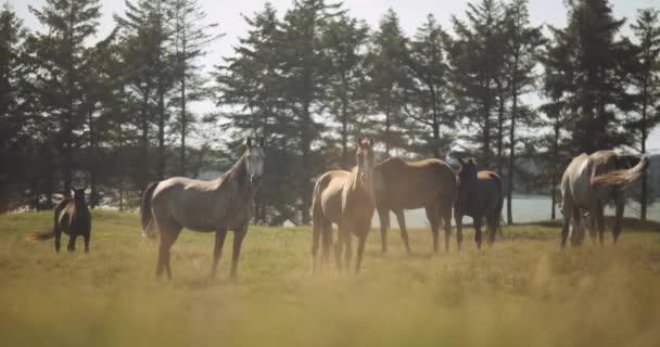 Sunlit Wildhorse In Meadow