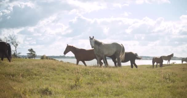 Divocí koně na slunci pasoucí se na louce