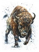 Buffalo watercolor painting wildlife animals