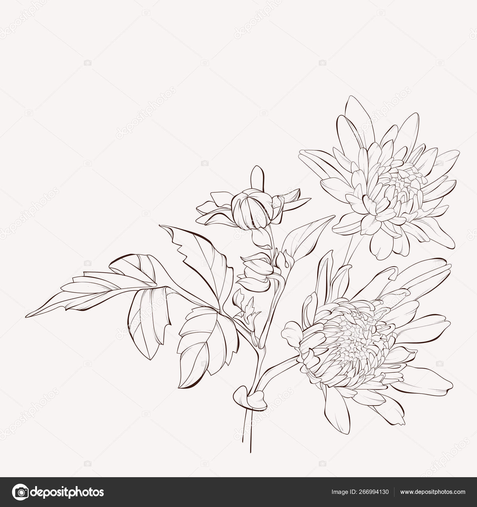 Vector Dahlia Flower Autumn Flowers Bouquet Element Design Hand Drawn Stock Vector C Jbunina 266994130