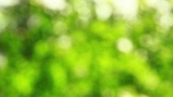 Zöld szikrázó bokeh erdei Soft videó háttér