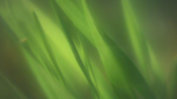 Travní zelená louka abstraktní fantasy Soft video