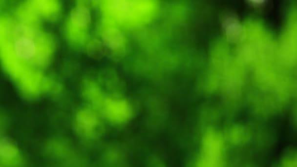 Öreg erdő elmosódott élénkzöld videó