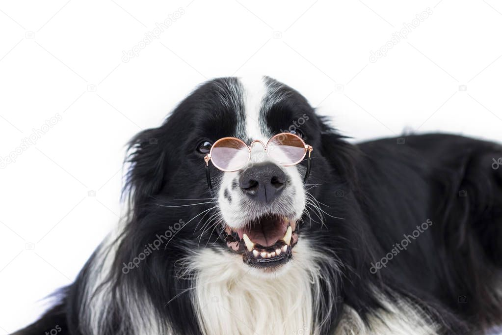 Dog in glasses looks like teacher or professor. He is definitely smart.