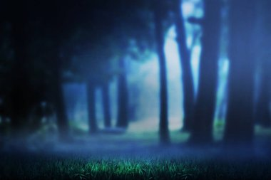 Dark forest and mist on the night