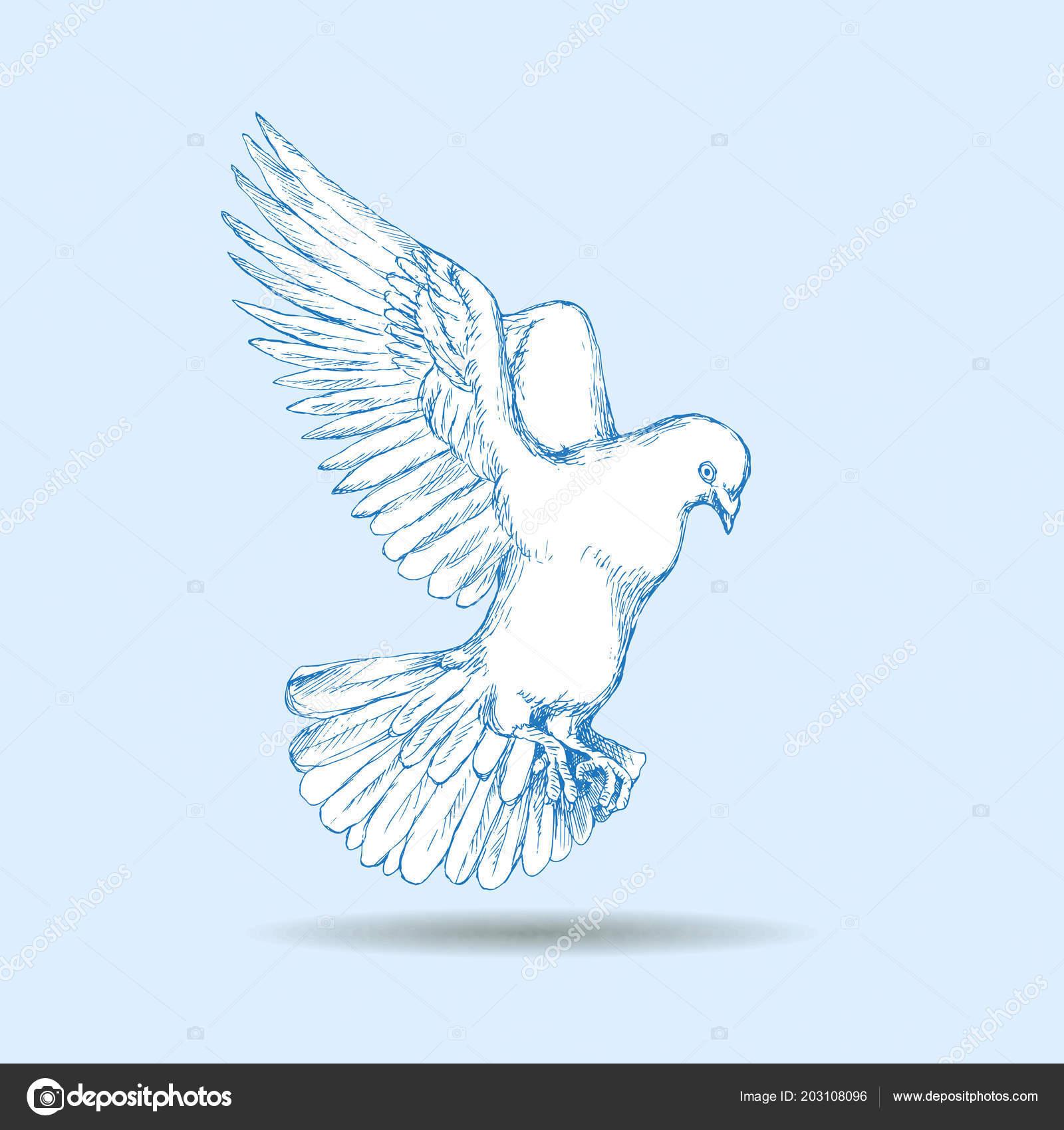 Bila Holubice Mouchy Ptak Neutralnim Pozadi Rucni Kresba Nacrtu