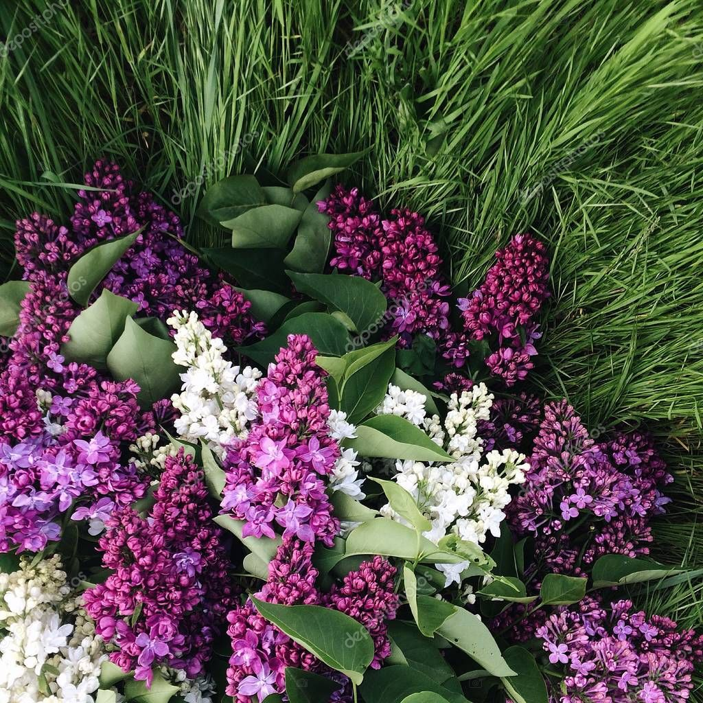 A bouquet of lilac lying on the grass. Square