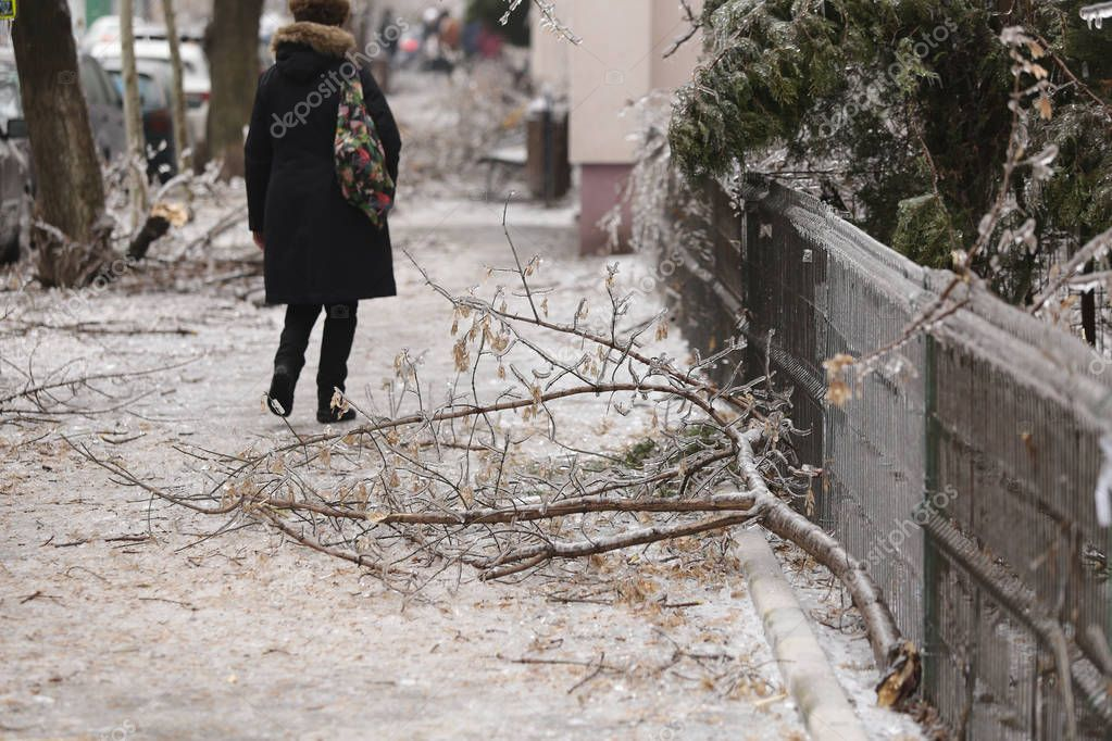 Broken tree branches on the sidewalk due to the weight of the ice after a freezing rain phenomenon