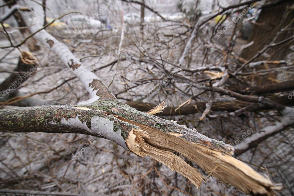 Broken tree trunk and branches due to the weight of the ice after a freezing rain phenomenon