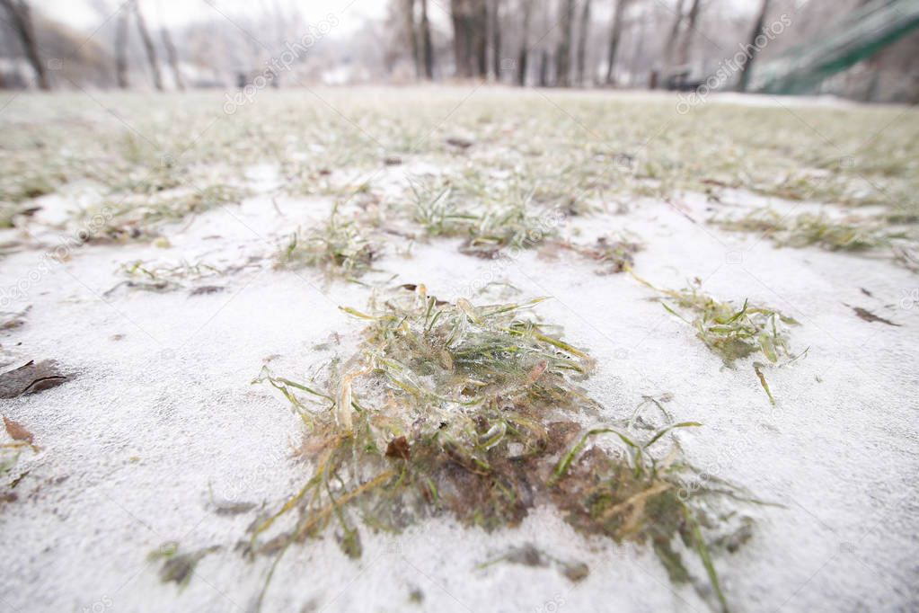 Frozen ground and vegetation during winter after a freezing rain weather phenomenon