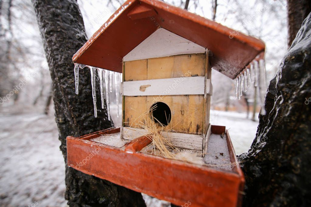 Frozen wooden bird house in a tree after a freezing rain weather phenomenon